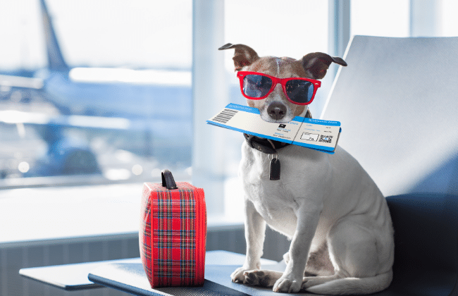 dog with boarding ticket